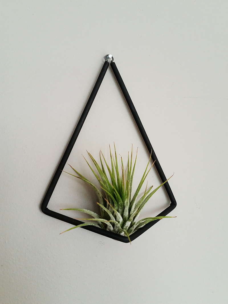 Phyt plant