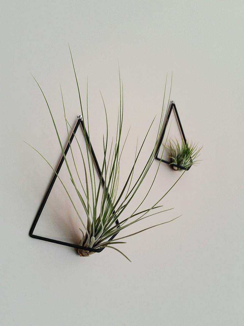 Phyt planten